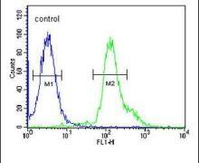 RSPO2 Antibody (PA5-25188)