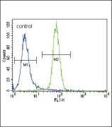 RUNX2 Antibody (PA5-14816)