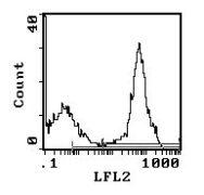 Rat Ig, kappa Secondary Antibody (SA5-10182)