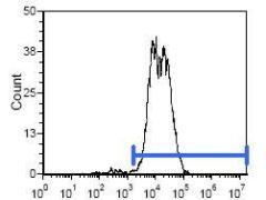 Rat IgG2b Secondary Antibody (SA5-10183)