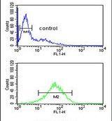 SBSN Antibody (PA5-25531)