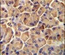 SEL1L Antibody (PA5-24179)