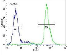 Neuroserpin Antibody (PA5-23892)