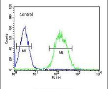CLASRP Antibody (PA5-25270)