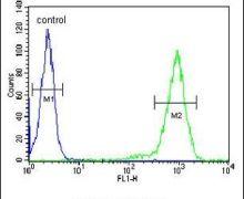 ST8SIA3 Antibody (PA5-25508)