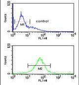 SMAGP Antibody (PA5-25195)