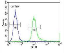 SPDYE3 Antibody (PA5-23861)