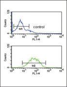 SPRY4 Antibody (PA5-26959)