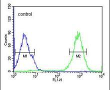 SPATA13 Antibody (PA5-25418)