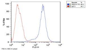 SSEA4 Antibody (MA1-021)