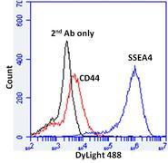 SSEA4 Antibody (MA1-021X)