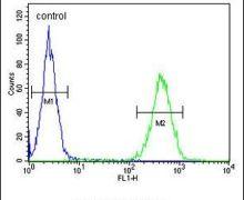ST7 Antibody (PA5-23995)