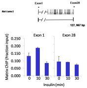 STAT3 Antibody (MA1-13042)