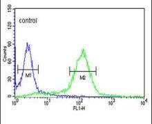 STIP1 Antibody (PA5-12423)