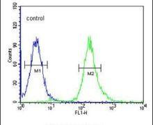 STX1A Antibody (PA5-26814)