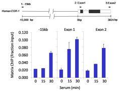 SIN3A Antibody (PA1-870)