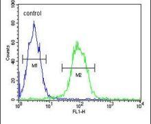 TMEM150A Antibody (PA5-26373)