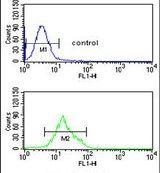 TCHP Antibody (PA5-26363)