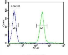 TCL6 Antibody (PA5-24335)
