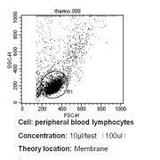 TCR V beta 12 Antibody (TCR2654)