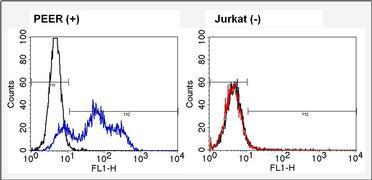 TCR V alpha 12.1 Antibody (TCR1764)