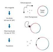 In vitro transposition reaction