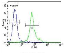 TM111 Antibody (PA5-25684)