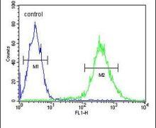 STING Antibody (PA5-26808)