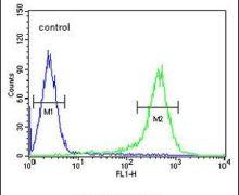 TMEM132D Antibody (PA5-23522)