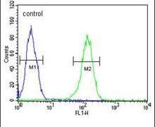 TMEM214 Antibody (PA5-23576)