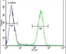 TMPRSS2 Antibody (PA5-14264)
