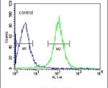 TMPRSS2 Antibody (PA5-14265)
