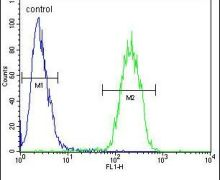 DcR3 Antibody (PA5-23645)