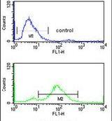 TNPO1 Antibody (PA5-24581)