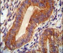 TPGS2 Antibody (PA5-24031)