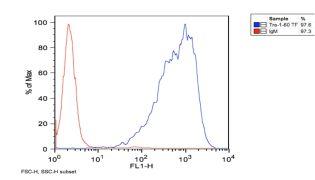 TRA-1-60 Antibody (MA1-023)