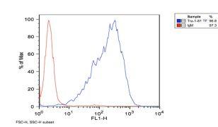 TRA-1-81 Antibody (MA1-024X)