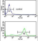 TSPAN2 Antibody (PA5-26329)