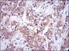 UBC9 Antibody (MA5-15916)