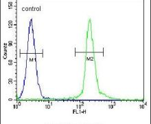 UNK Antibody (PA5-24557)