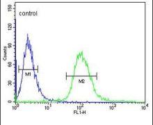 UTY Antibody (PA5-26082)