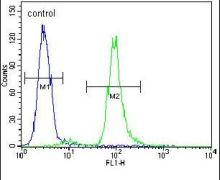 Vitrin Antibody (PA5-24009)