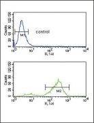 Vitronectin Antibody (PA5-25964)