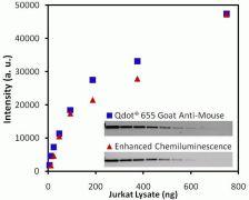 Mouse IgG Secondary Antibody (W10803)