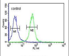 WDR73 Antibody (PA5-25221)