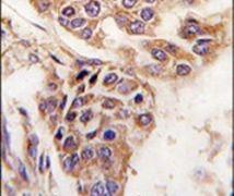 WDYHV1 Antibody (PA5-12414)