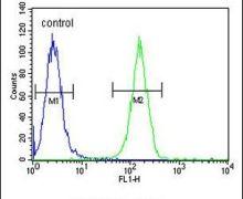 Ku70 Antibody (PA5-25011)
