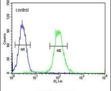 Ku70 Antibody (PA5-25012)