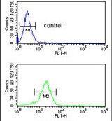 YAP1 Antibody (PA5-13504)