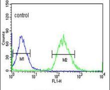 YME1L1 Antibody (PA5-24808)